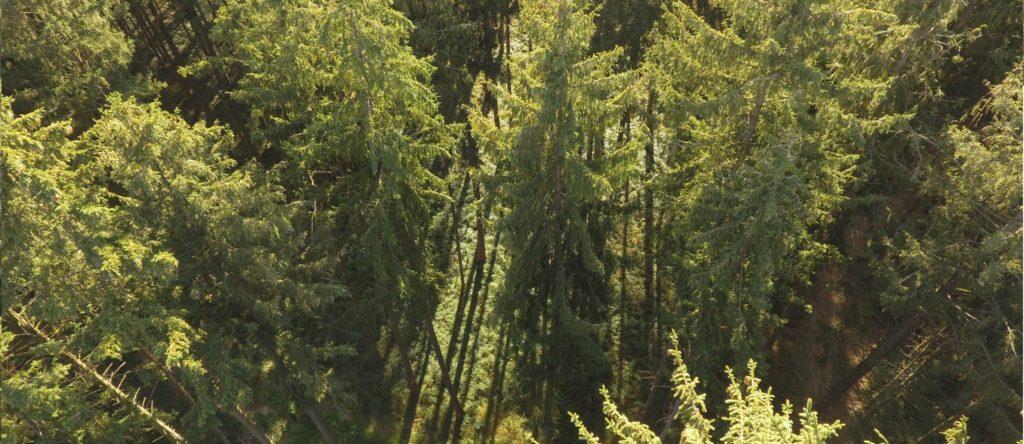 Forst - Titelbild1