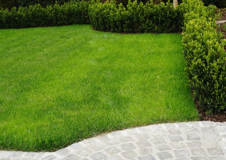 Die richtige Rasenpflege im Frühjahr