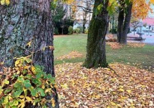 Den Rasen im Herbst nicht vernachlässigen